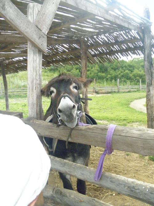 Милый ослик. Сафари парк