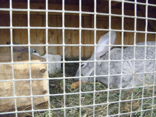 Кролик.Сафари-парк