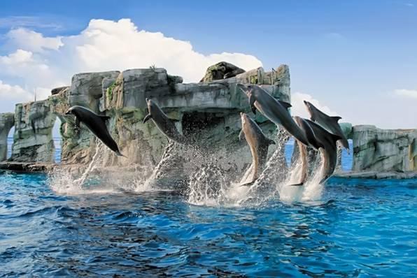 """Дельфинарий """"Ольтремаре"""". Отдых с детьми в Италии"""