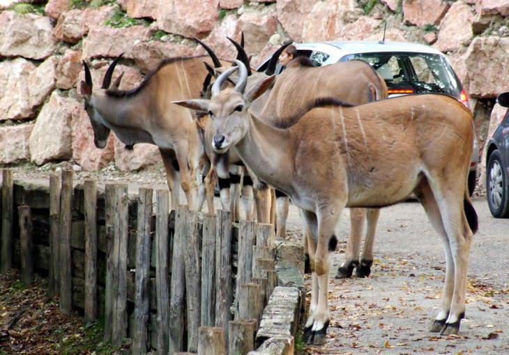 Сафари парк Натура Вива Италия Гарда