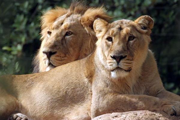 Отдых в Израиле с детьми. Библейский зоопарк