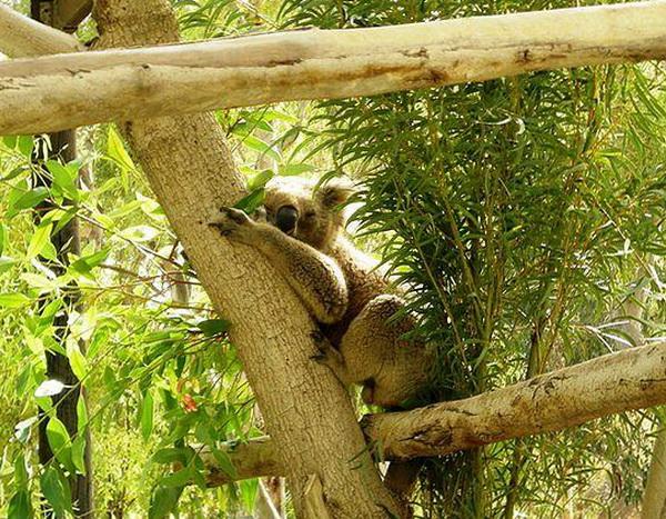 Куда сходить с детьми в Израиле. Парк австралийских животных Ган-Гуру