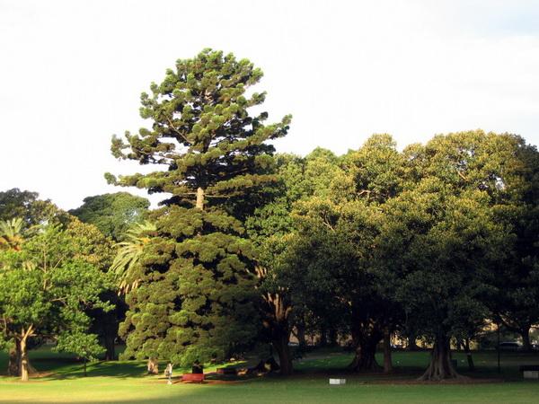 Путешествие в Австралию с детьми. Королевский ботанический сад