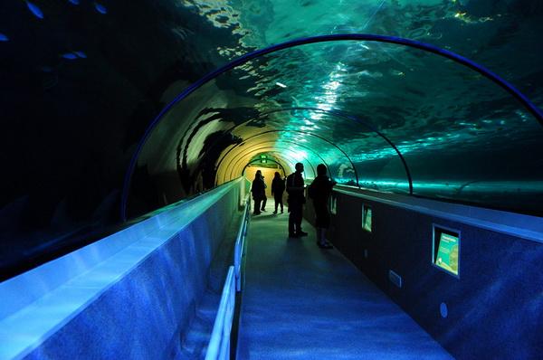 В Австралию с детьми. Сиднейский аквариум