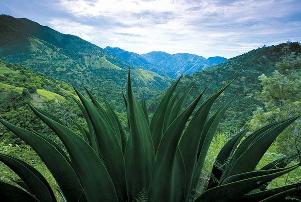 Ямайка. Список безвизовых стран Северной Америки и Карибского бассейна