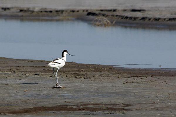 Птицы. Озеро Эльтон