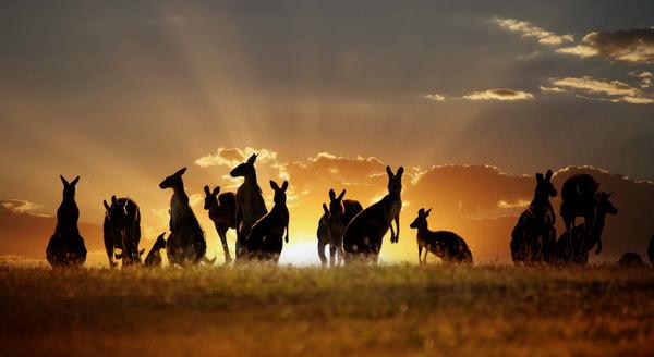 Конкурс о путешествии в Австралию