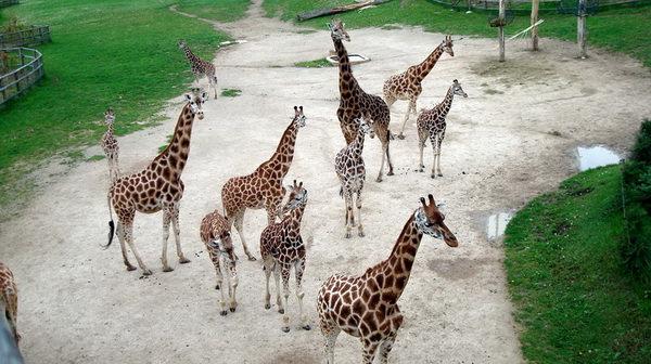 Пражский зоопарк в Праге