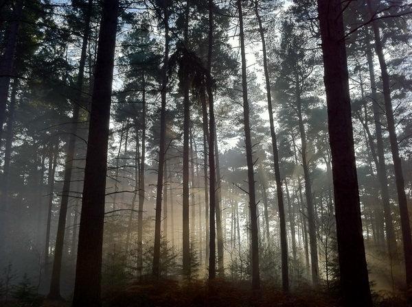 Запретный лес Black Park где снимали фильм о Гарри Поттере