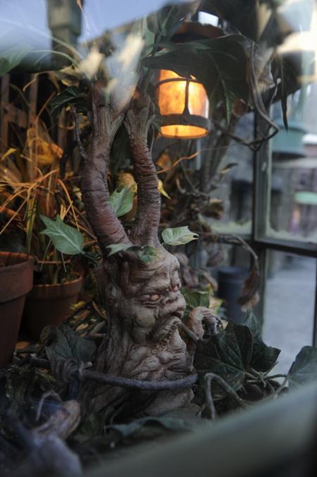 волшебный мир гарри поттера корень мандрагоры