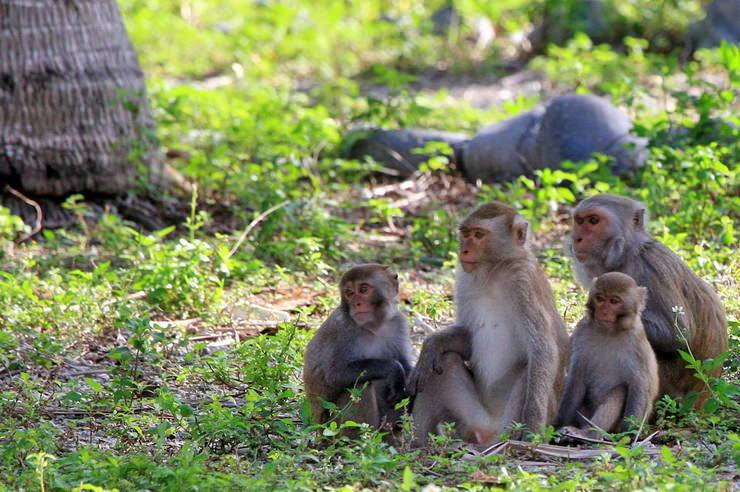 Остров обезьян Хон Лао, Нячанг, Вьетнам