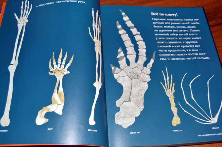 "Страница из книги ""Кости и скелеты"" Стива Дженкинса"