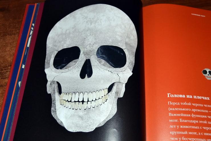 """Иллюстрация из книги """"Кости и скелеты"""" Стива Дженкинса"""