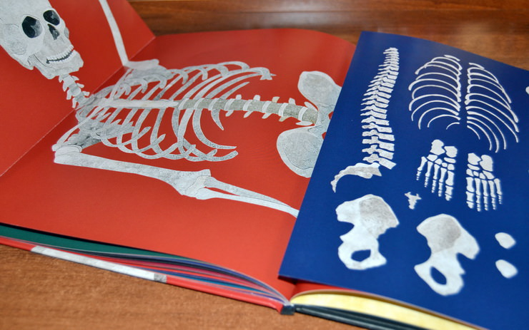 "Разворот книги ""Кости и скелеты"" Стива Дженкинса"