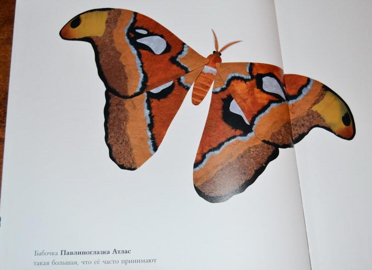 """Страница книги """"Сравни! Животные в натуральную величину"""""""
