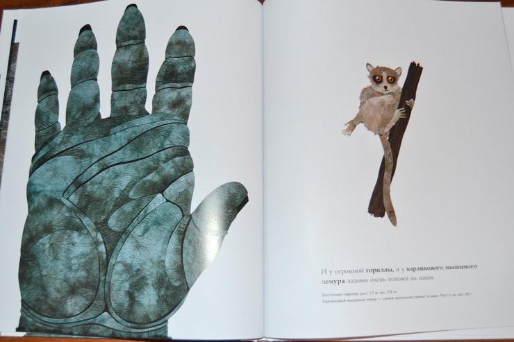 """Страница книги """"Сравни! Животные в натуральную величину"""" Стива Дженкинса"""