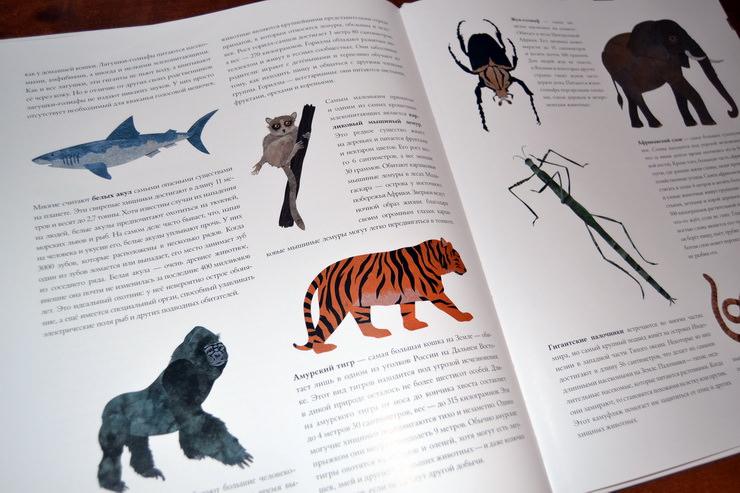 """Страница из книги """"Сравни! Животные в натуральную величину"""" Стива Дженкинса"""