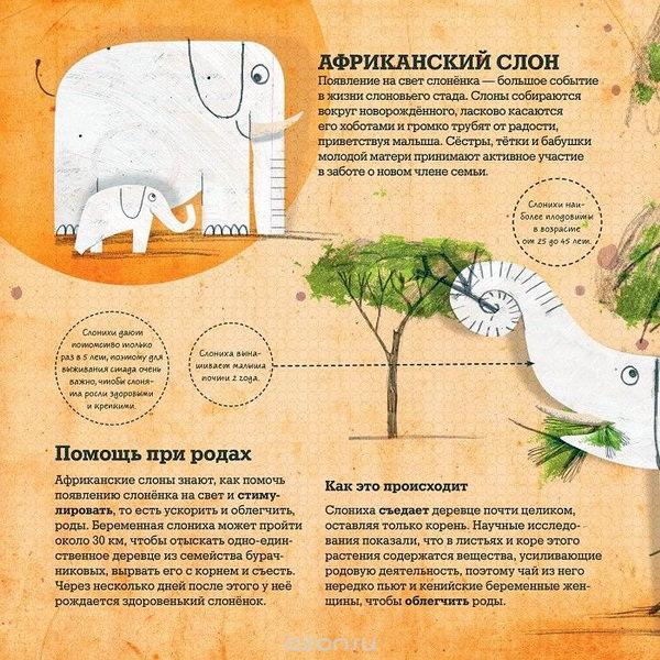 Животные врачи 3