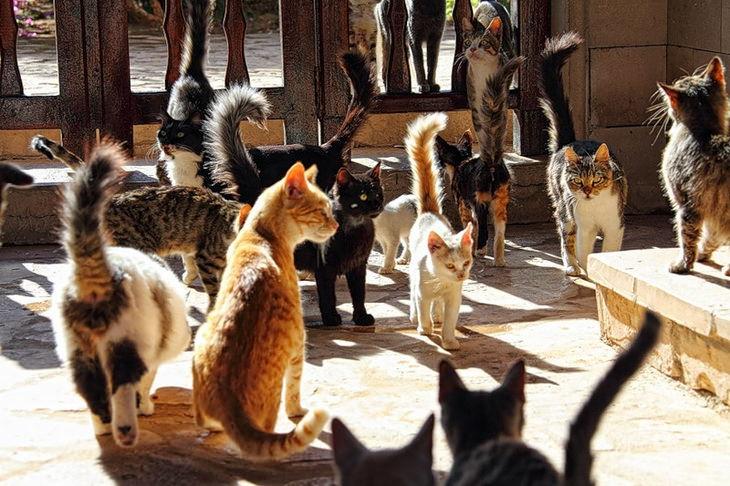 Кипр. Кошки