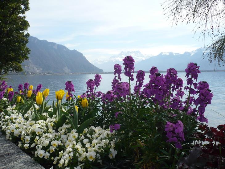 Цветение в апреле(2 апреля)