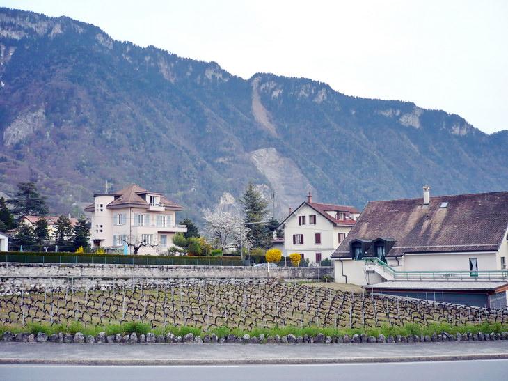 Виноградники, которым нет цены