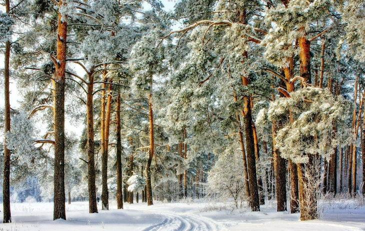 podmoskove-zimoj