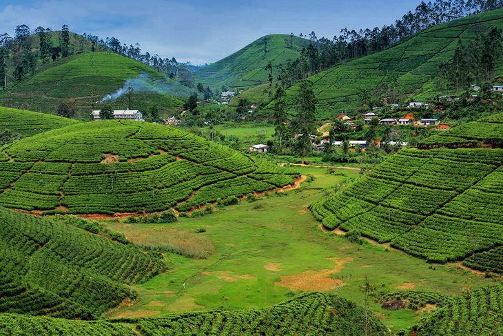 Чайная плантация Нувара-Элия